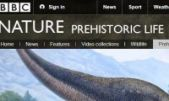 Find out about prehistoric life on the BBC website